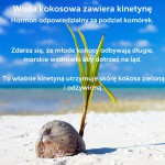 COCO FARM WODA KOKOSOWA BIO Z PUREE GRUSZKI I SOKIEM Z ANANASA NATURALNA BEZ CUKRU